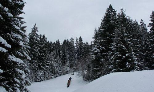 Unterwegs in der verschneiten Landschaft.