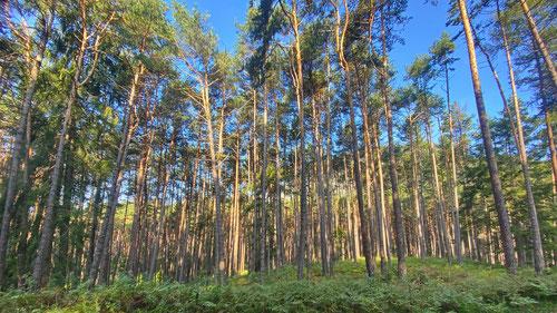 2020/09: Den Wald vor lauter Bäumen nicht sehen...