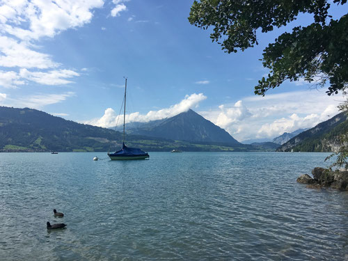Picknick am Thunersee