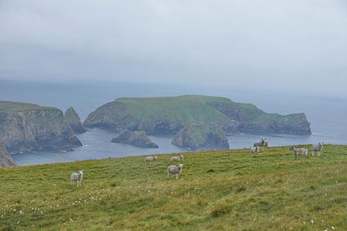 Wahre Klischees: Regen, Grün, Schafe