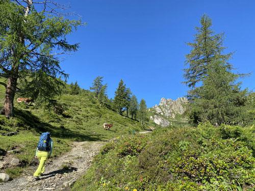 2020/07: Auf dem Weg zur Arlspitze (Bildmitte) im Grossarltal (A/SL)