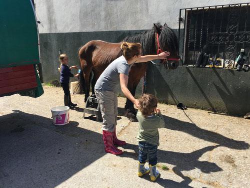 Wir lernen die Pferde kennen...
