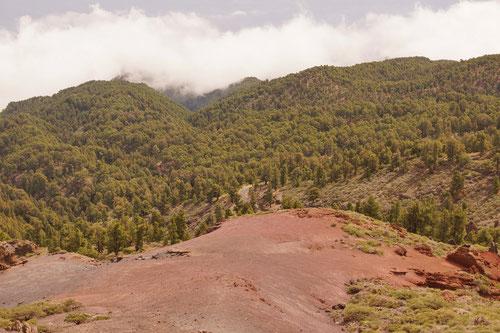 Blick auf einen Zipfel der Passtrasse, welche gleich wieder in den Kiefernwald eintaucht.
