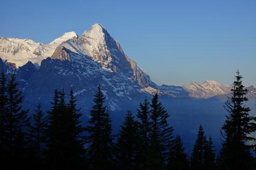 Morgenstimmung: Blick auf das Schreckhorn 3078m.