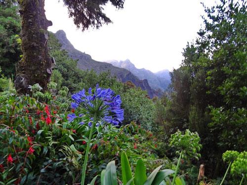 Blumen, Büsche, Bäume, Berge