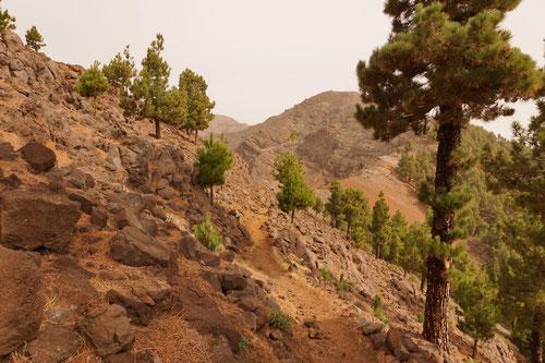 Einfach schön, der grüne Kontrast der Kiefern in der ockerfarbenen Vulkanlandschaft