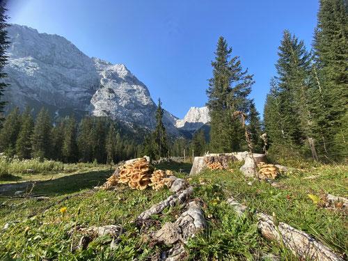 2020/09: Im Gaistal (A/Wettersteingebirge)