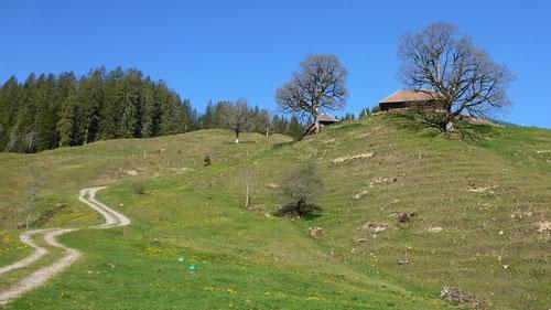 Typische Emmentaler-Hügellandschaft
