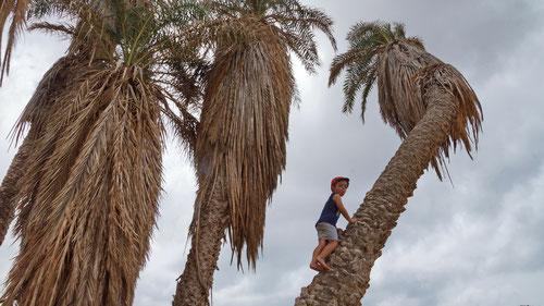 Klettern auf den Palmen in den Dünen von Morrinho.