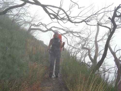 Unterwegs im nebligen Märchenwald