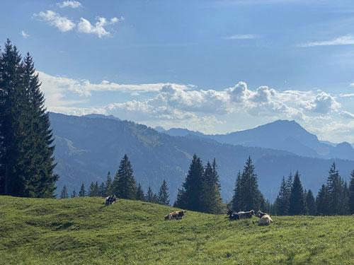 Hier haben die Kühe eine tolle Weide mit exzellenter Aussicht.