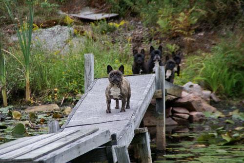 Die Hunde blockieren den Rückweg über die kleine Holzbrücke zum Haus