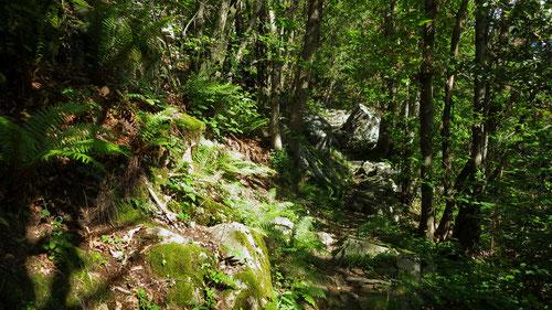 Der Kletterspot liegt inmitten des traumhaften Kastanienwaldes.