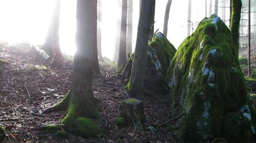 Die Morgensonne dringt in den Wald ein