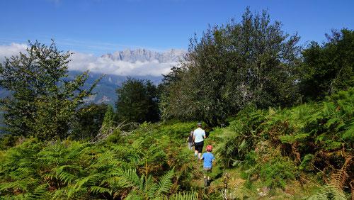 Das Berggipfel-Bouquet der Picos de Europa kommt langsam in Sichtweite!