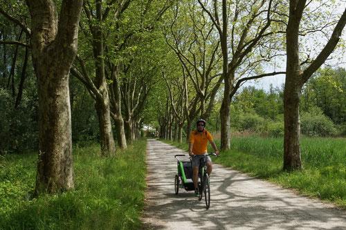 Die Velowege führen durch schöne Baumalleen
