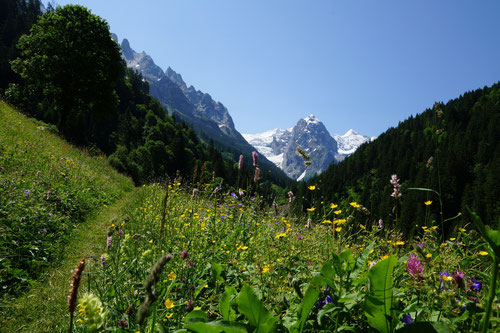 Blick ins Reichenbachtal. Im Hintergrund das Wellenhorn (3191m).