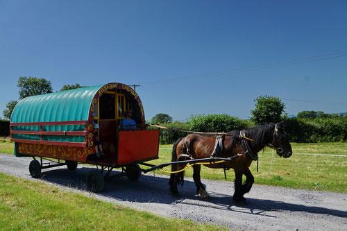 Unser Planwagen mit Zugpferd Tuffy.