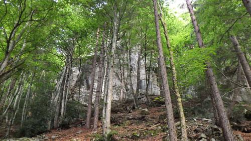 Der Sektor Bockstor Extrem liegt im schattigen Wald.
