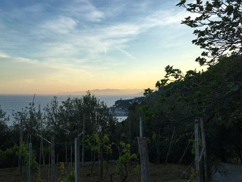 Aussicht vom Garten des La Selvas