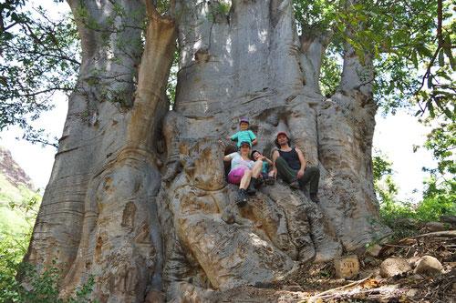 TELO unterm Baobab-Baum
