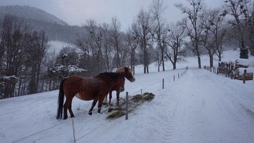 Pferde beim Lauwilerberg.