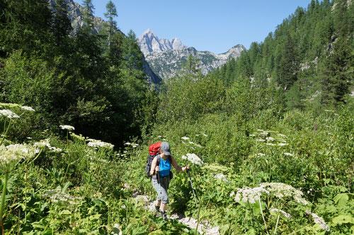 Wandern in der herrlichen Bergwelt.