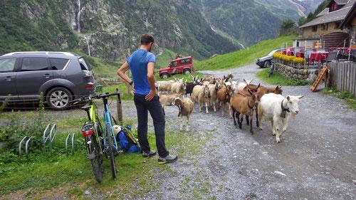 Die Bikes werden beim Bergrestaurant Stäfeli abgestellt. Von hier geht es zu Fuss auf die Spannorthüttte weiter.