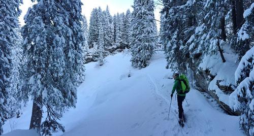 In der Waldpassage von Fürstein