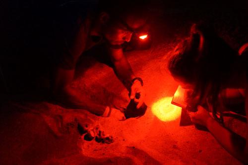 Erfassung und Kartographierung der Schildkröteneier