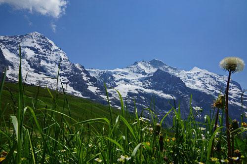 Mönch (4'107m) und Jungfrau (4'158m).