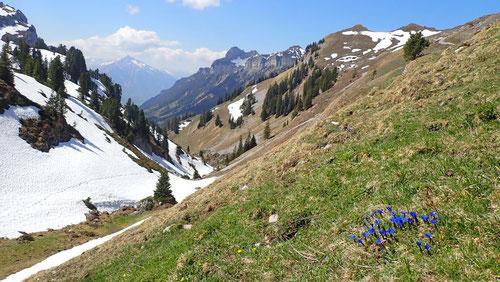 2020/04: Blick auf den Niesen von Oberberg bei den Sibe Hängste (CH/BE)
