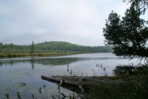 Einzer der zahlreichen Seen auf dem Mizzy Lake Trail