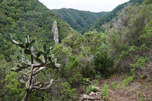 Immer wieder galt es tiefe, dichtbewaldete Schluchten zu durchqueren.