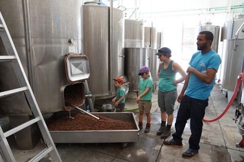 Der Besuch in der Weinfabrik. Hier wird der Chã das Caldeiras hergestellt.
