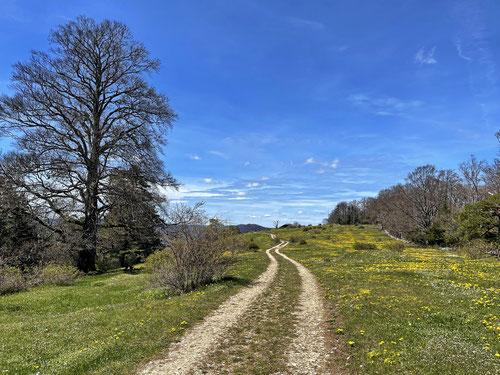 Für mich der schönste Streckenabschnitt des Tages: Pâturage du Haut du Droit (JU) - Haute-Sorne