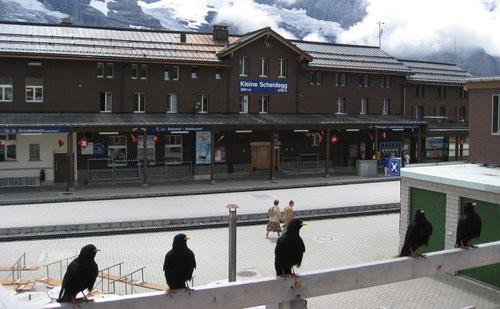 Bahnhof bei der kleinen Scheidegg (2061m)