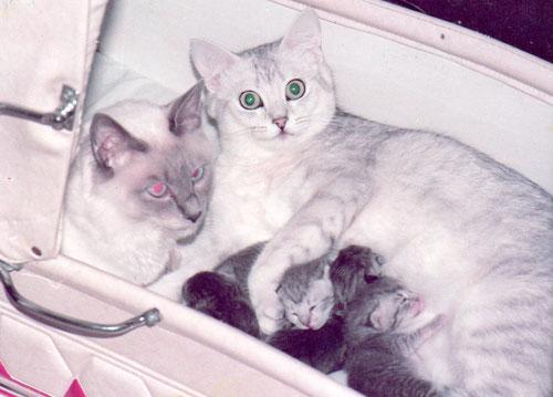 Katze links im Bild hat kein Tapetum lucidum, die Pupille reflektiert rot. Foto: Birgitta Kuhlmey