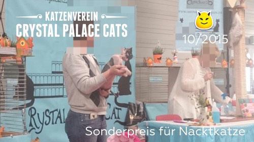 Trotz Zucht-Verbot: Sonderpreis für eine nicht kastrierte Nacktkatze von Sabine S., Katzenausstellung am 24.10.2015 in Ulm, Katzenverein Crystal Palace Cats, Foto: A. van der Molen