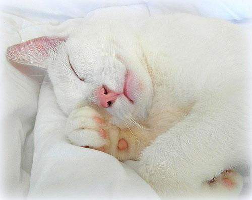 Weiße Katze mit W-Gen