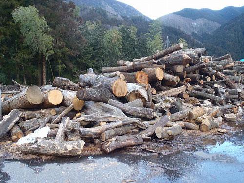 大径木処理中...