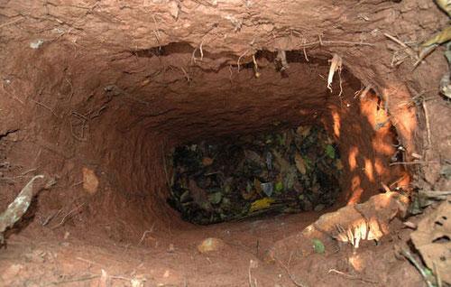 El hombre excava hoyos profundos para atrapar animales y para esconderse. Se cree que es el único superviviente de una tribu masacrada por terratenientes en los años setenta y ochenta. © Survival