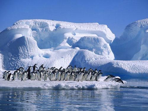 Pingüinos de las Tierras Australes Francesas. Foto (CC): Archivo /20 minutos