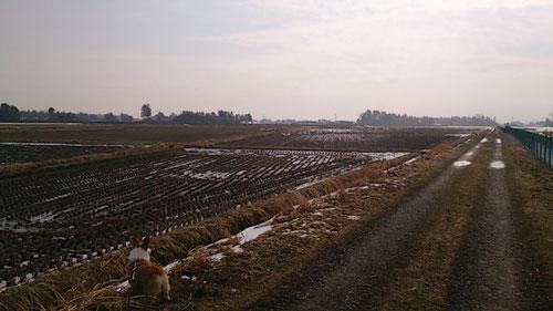 愛犬(左下)のお散歩中、毎年やってきている白鳥が今年も・・・