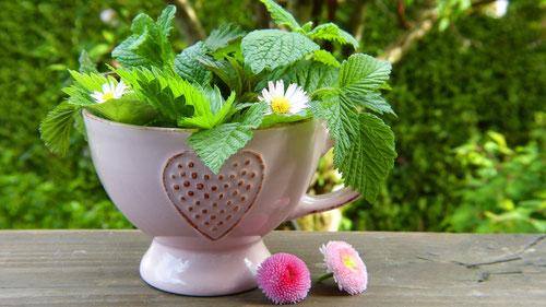 Tasse mit Minz-Blättern und Gänseblümchen