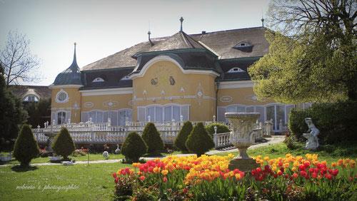 austria / vienna / cobenzl palace