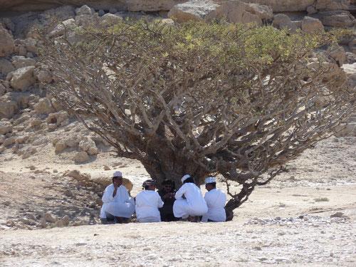 Unter dem Weihrauchbaum