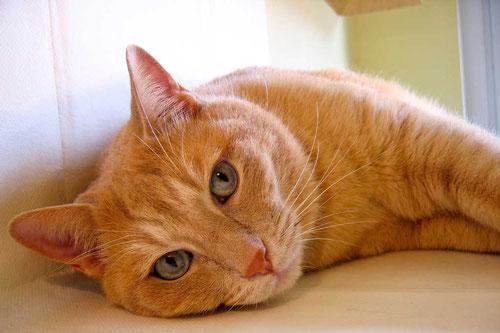 Hauskatzen können in einer Box oftmals in der Kabine mitreisen/piu700  / pixelio.de
