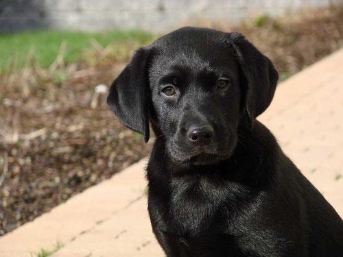 Kleinere Hunde können mitunter auch in der Kabine mitreisen/renihahn  / pixelio.de