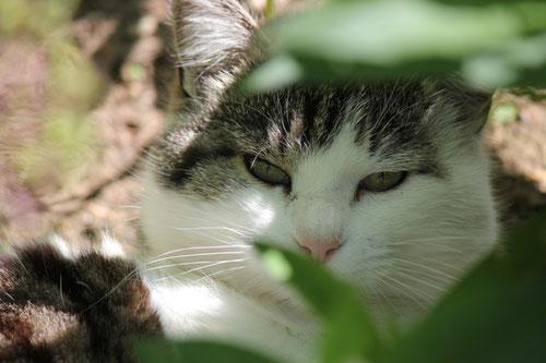Minka (Sommer 2012)